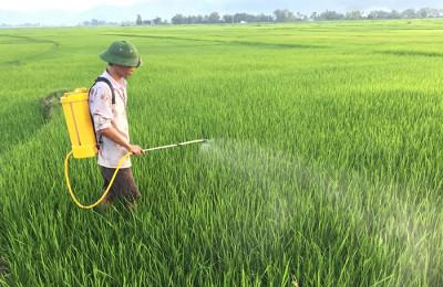 Sử dụng thuốc trừ sâu đã góp phần làm giảm các loại sâu bệnh hại